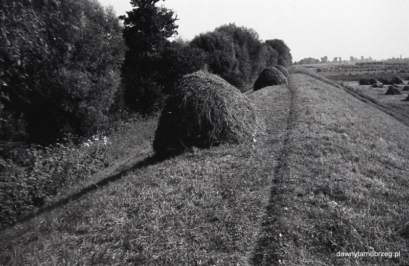 Tarnobrzeg, w stronę Podłęża, II połowa lat sześćdziesiątych